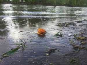 yellow rose river